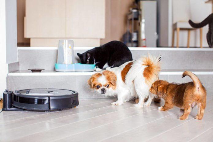 Les aspirateurs robots sont-ils bons pour les poils de chien ? - Home Robots